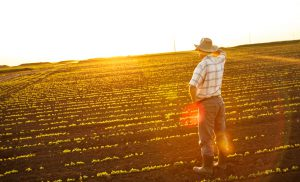 boost your business harvest